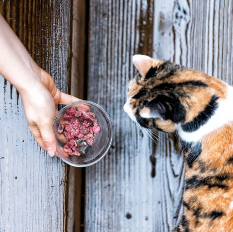 homemade cat food - raw diets