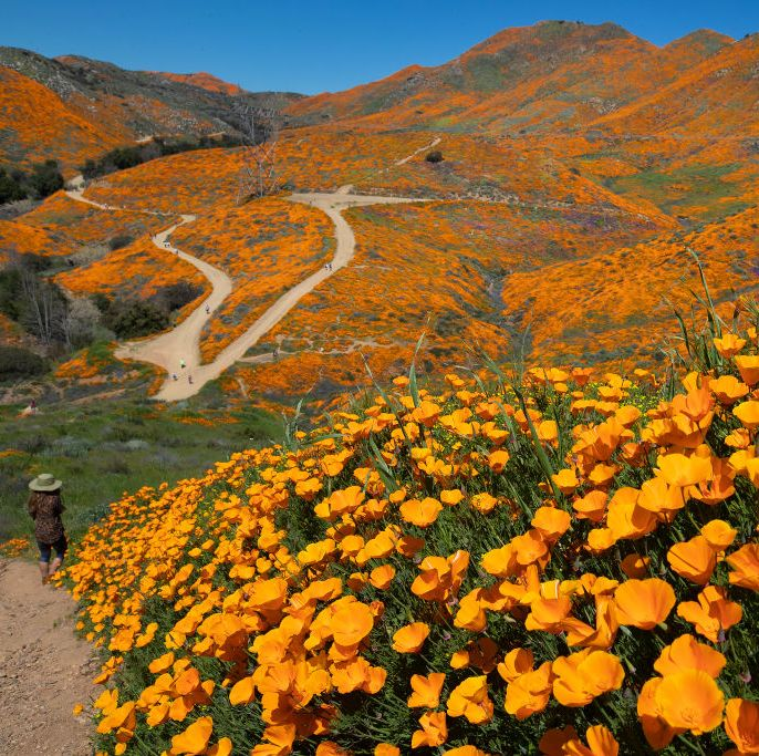 Thousands of tourists have been visiting this California town to see rare 'super bloom' display