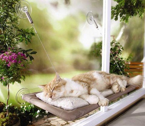 cama-hamaca para gatos amazon