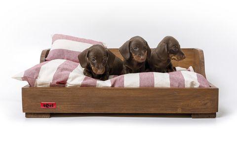 Mascotas: cama para perros