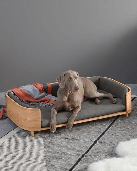 cama de diseño para perros