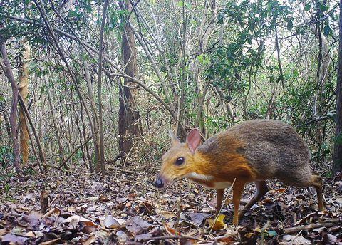 Vertebrate, Nature, Terrestrial animal, Wildlife, Nature reserve, Adaptation, Biome, Organism, Leaf, Woodland,