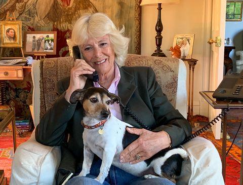 camilla duchess of cornwall work from home birkhall dog