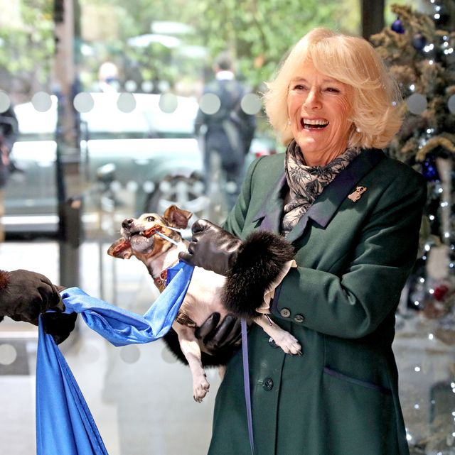 the duchess of cornwall visits battersea dogs home in windsor
