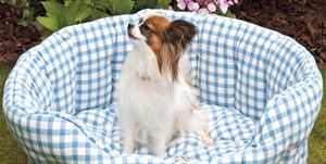 Mascotas: Cama para perro