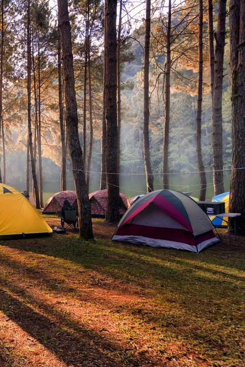 camping and tent under the pine forest in sunset at pangung pine forest park mae hong son, north of thailand