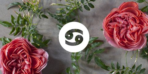 Flower, Pink, Garden roses, persian buttercup, Rose, Red, Plant, Rose family, Cut flowers, Petal,