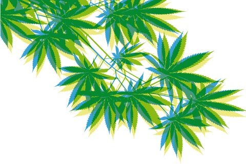Weed. Vegetable silhouette. Branch of cannabis. Vector.