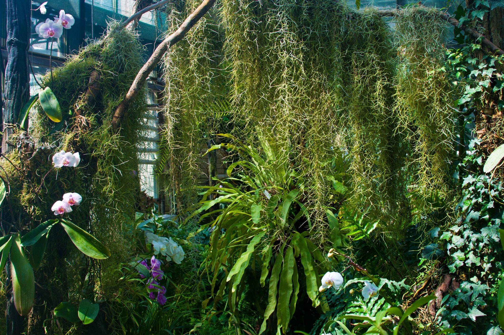 Piante Tropicali Da Interno piante tropicali da appartamento, tendenze 2019
