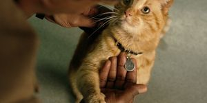 Captain Marvel, Cat