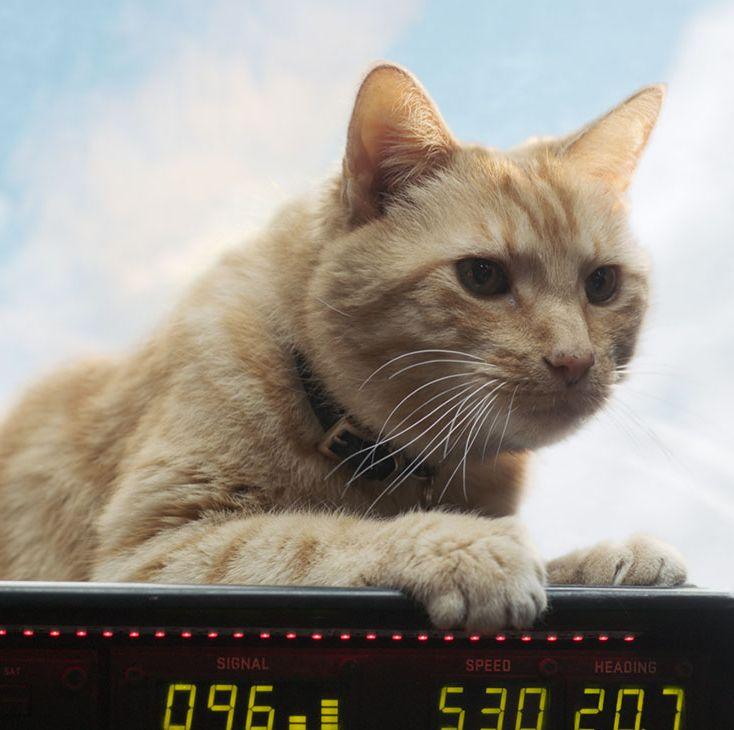 Samuel L. Jackson Was The 'Captain Marvel' Set's Cat Whisperer