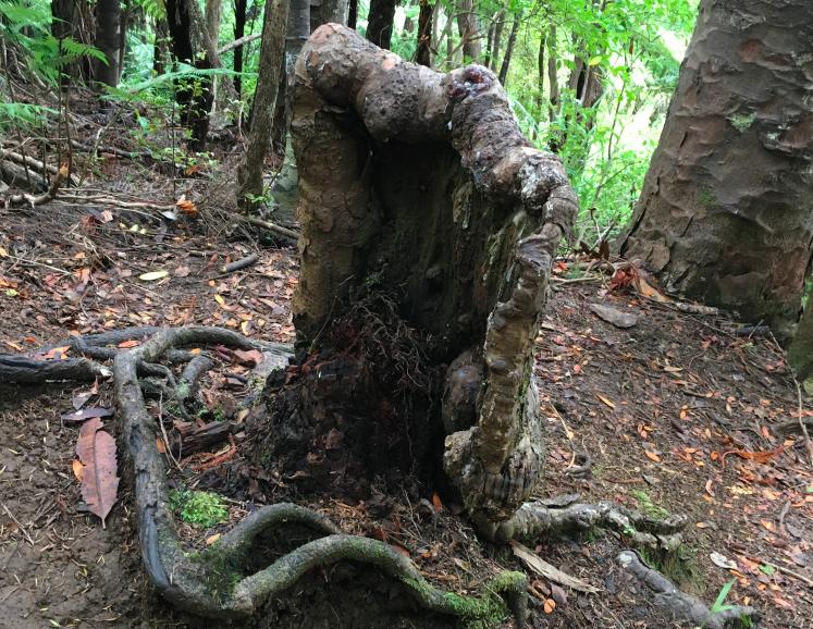 Este árbol debería estar muerto y sin embargo...