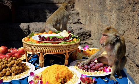 celebraciones fiestas festivales viajes curiosas raras