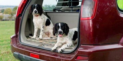 Dog, Mammal, Vertebrate, Canidae, Dog breed, Carnivore, Vehicle, Sporting Group, Car, Spaniel,