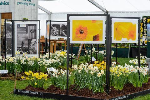 Smith College Bulb Show 2020.Cardiff Flower Show 2020 Rhs Cardiff Tickets Dates Location