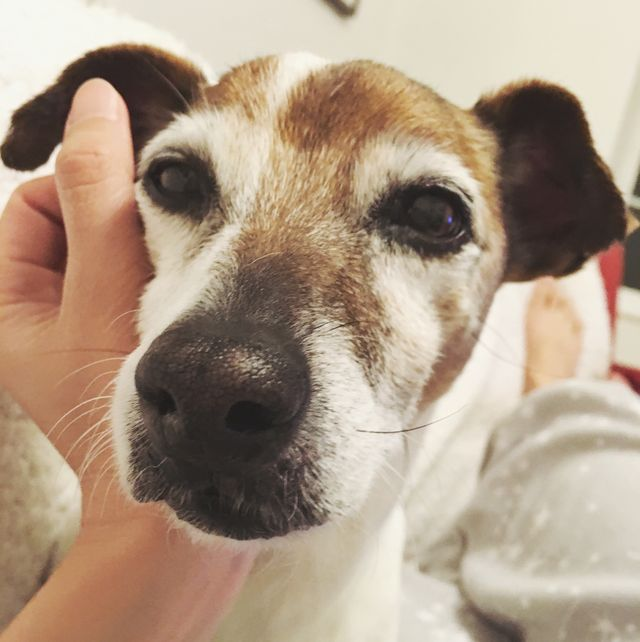 caring for your pets   pov