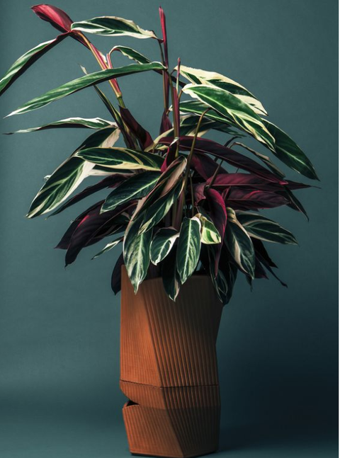 The Carmen planter can keep your plant alive for three weeks!