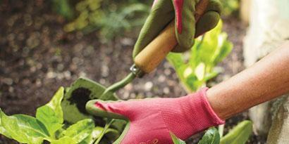 Leaf, Soil, Adaptation, Botany, Flowering plant, Ingredient, Produce, Herb, Annual plant,