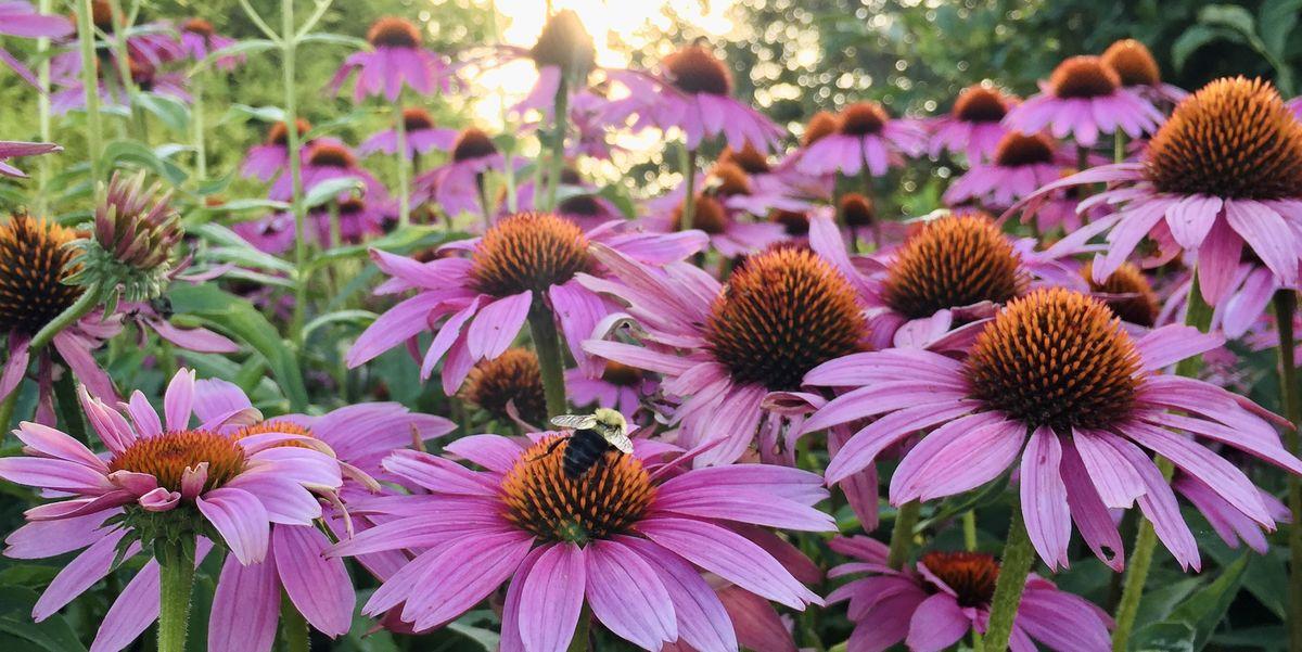 9 Best Drought-Tolerant Plants – Drought-Resistant Flowers, Grasses, Vines, and More