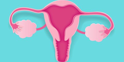 cute cartoon uterus