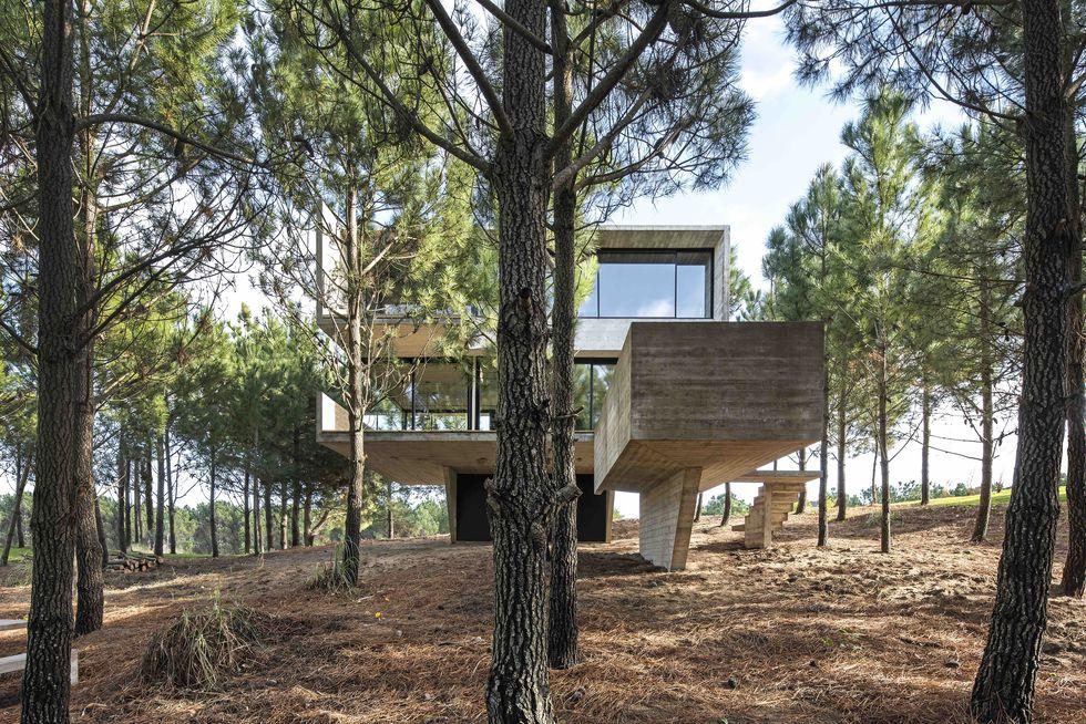 Una possente struttura in cemento può diventare così leggera da fluttuare sugli alberi?