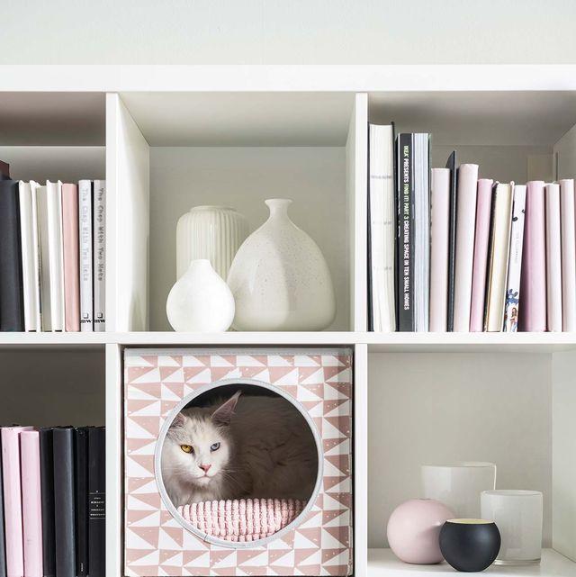 Shelf, Shelving, Furniture, Bookcase, Room, Wall, Interior design, Table, Hutch, Cupboard,