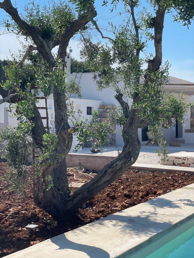 casa rural reformada en puglia la selva de estilo mediterráneo