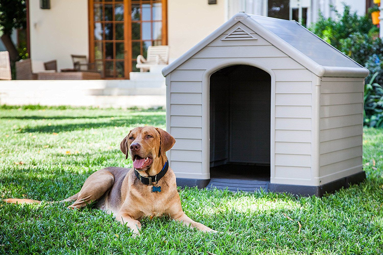 Caseta para perros