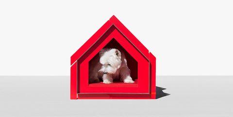 Caseta de diseño para perro