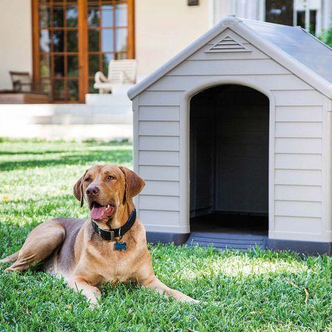 caseta de resina para perros