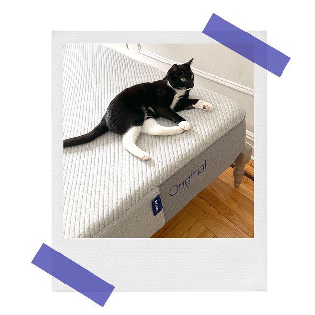 cat on casper foam mattress