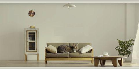 Il Nuovo Must Dellarredamento Il Divano Per Gatti