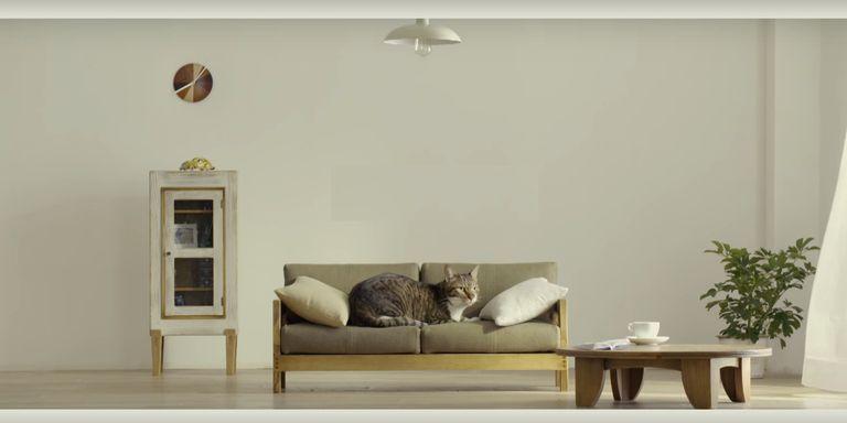 Il nuovo must dell 39 arredamento il divano per gatti for Arredamento per gatti