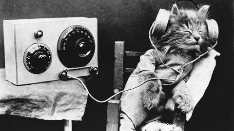 tibby the cat tunes into a radio program photo by © hulton deutsch collectioncorbiscorbis via getty images