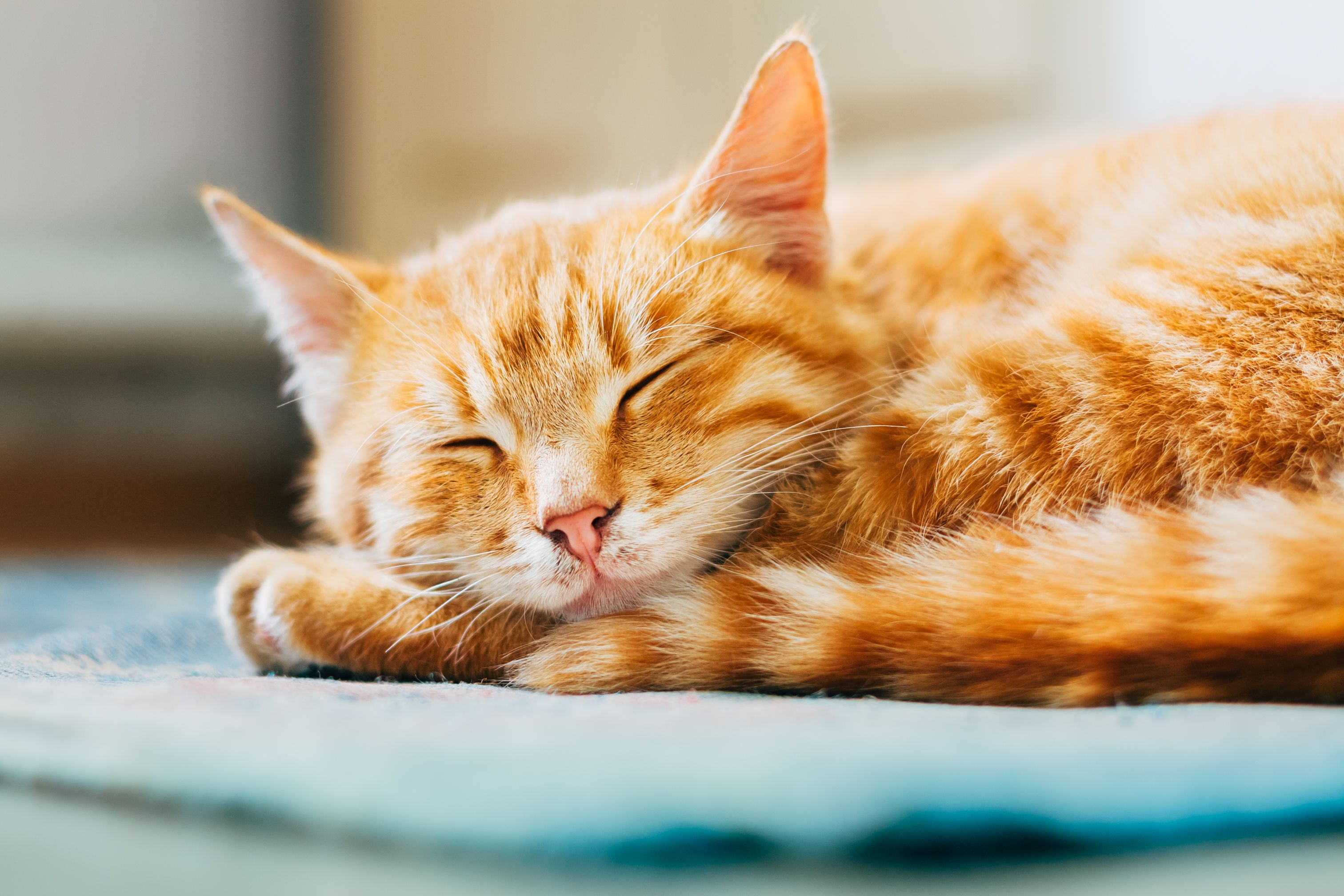 20 of the most popular cat names for 2019 have been revealed