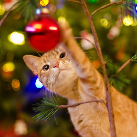 Cat Christmas.How To Keep Your Cat Out And Away From The Christmas Tree