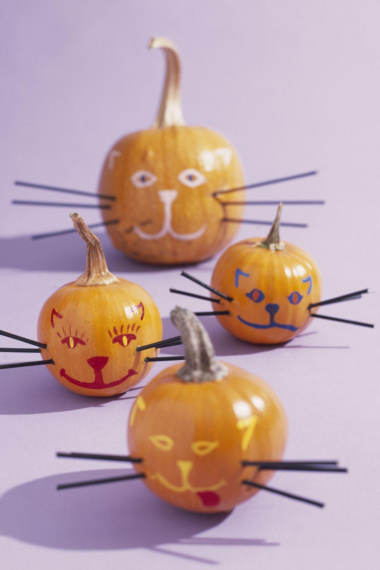 cat face mini pumpkins