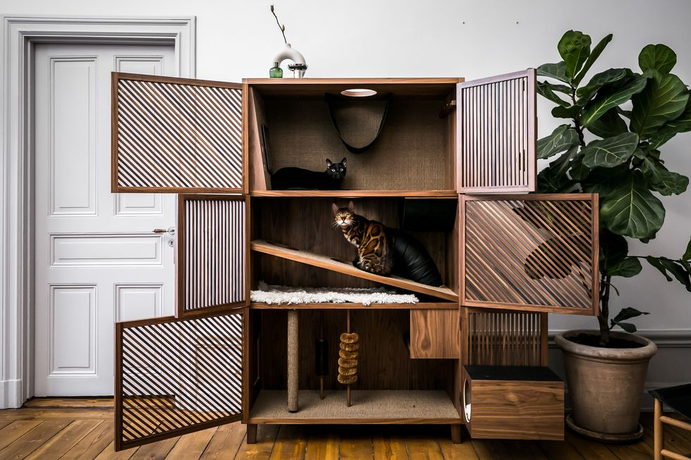 The Hidden Cat House in a Cabinet