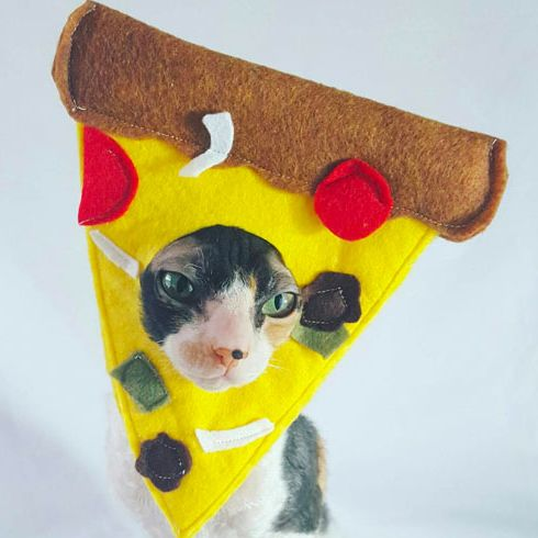 How Much Was Spent On Halloween Costumes For Pets 2020 Best Cat Halloween Costumes 2020   22 Creative Cat Halloween