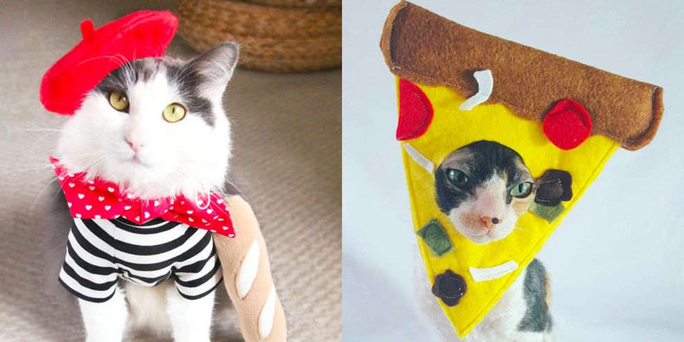 The 22 Best Cat Halloween Costumes to Help Your #1 Feline Score All the Treats