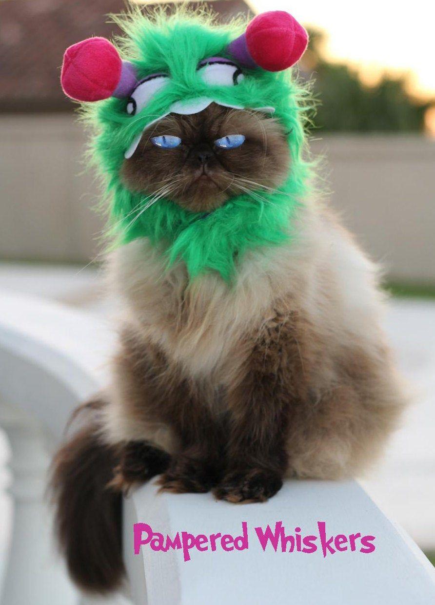 Pet Cat Halloween Costumes , Cute Ideas for Cat Costumes