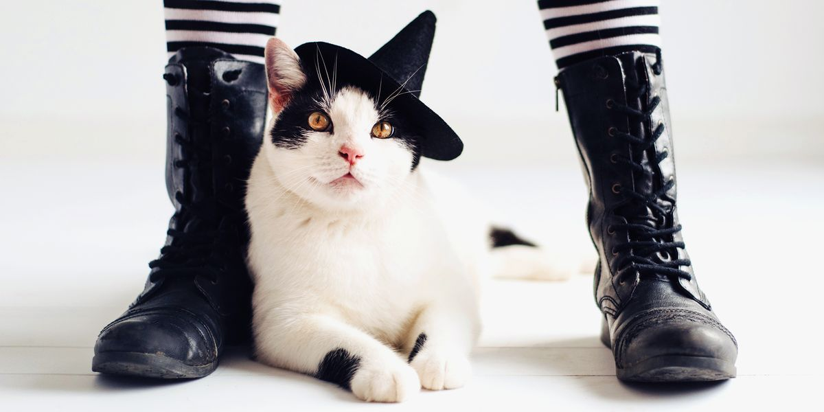 12 Best Cat Halloween Costumes 2019 Funny Cat Costume Ideas