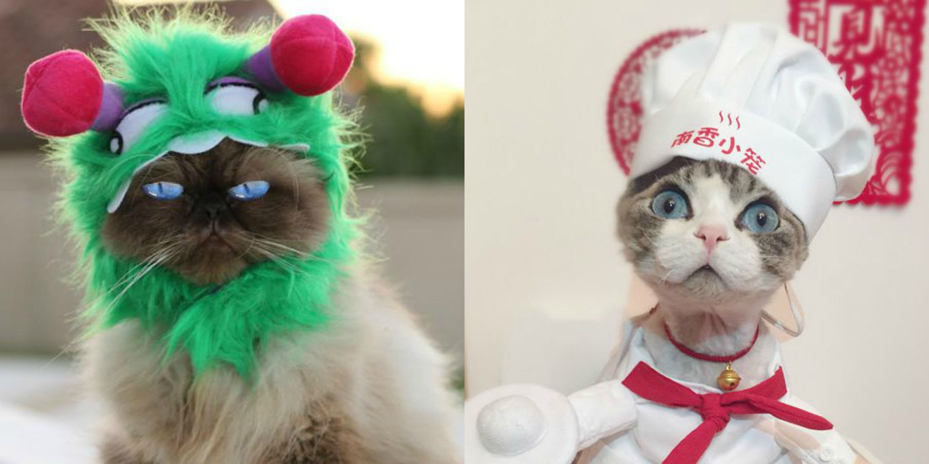 cat halloween costumes & 26 Pet Cat Halloween Costumes 2018 - Cute Ideas for Cat Costumes