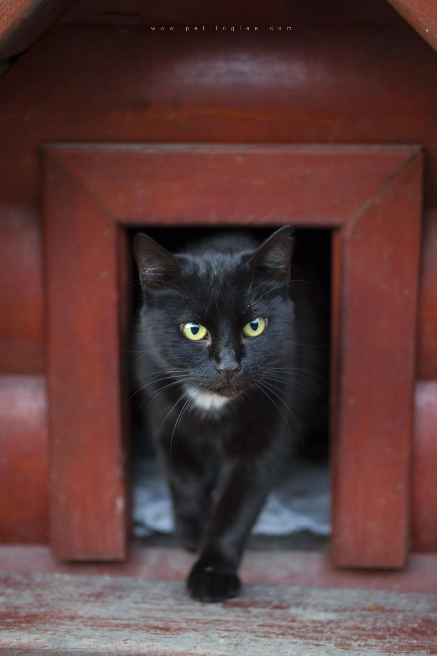 Passerby Catches Black Cat Brilliantly Using a Door Knocker in Viral Facebook Video