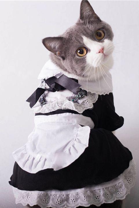 maid cat halloween costume