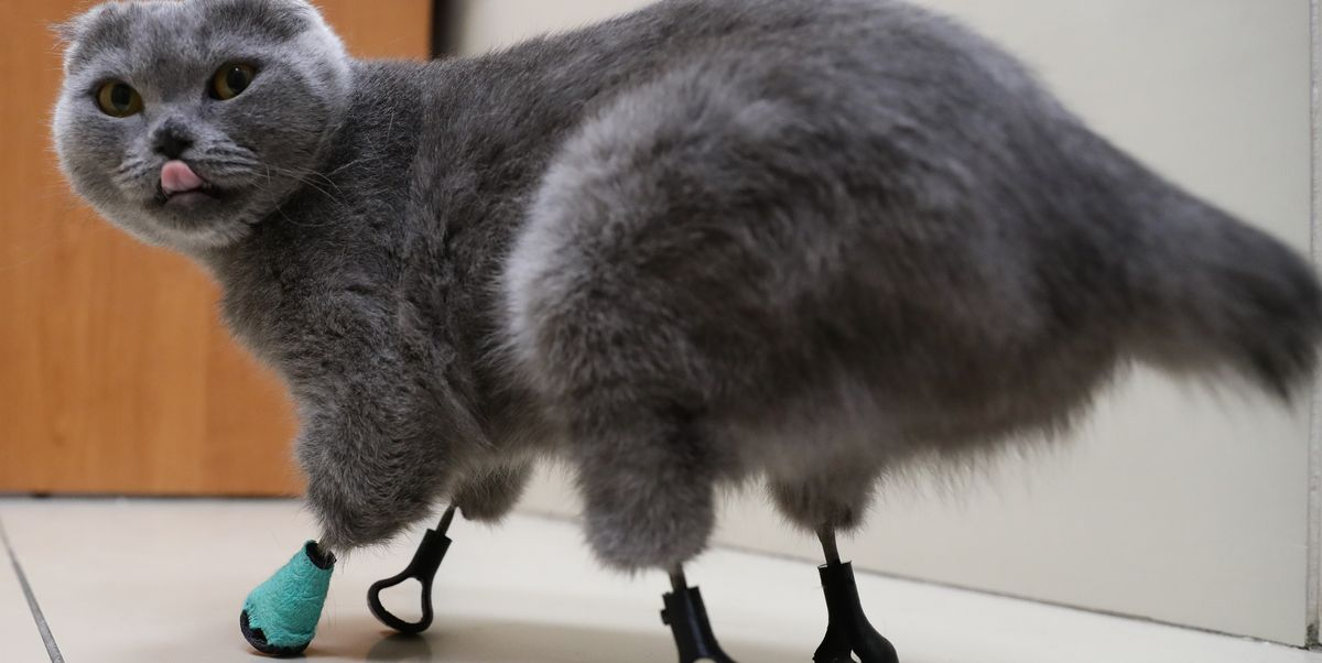 This Hero Cat Is Surviving and Thriving With 3D-Printed Titanium Limbs