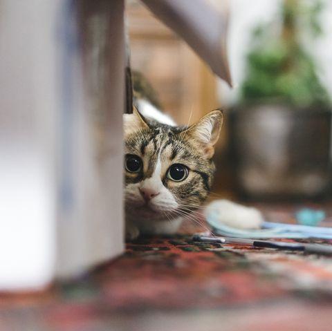 gato jugando en casa
