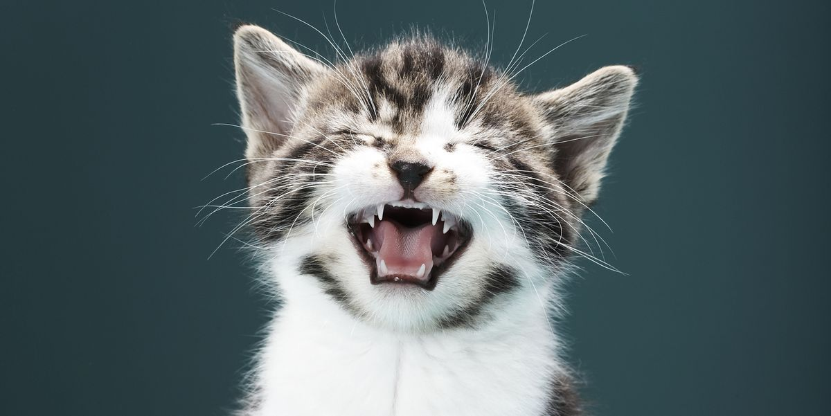 20 Hiss-terical Cat Puns (Yes, We Went There)