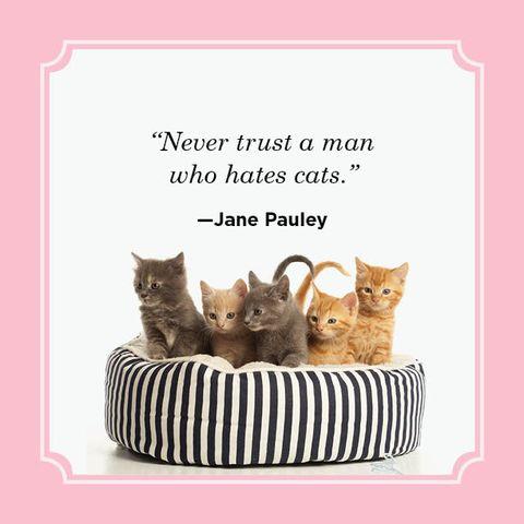 25 Best Cat Quotes - Funny Cat Quotes