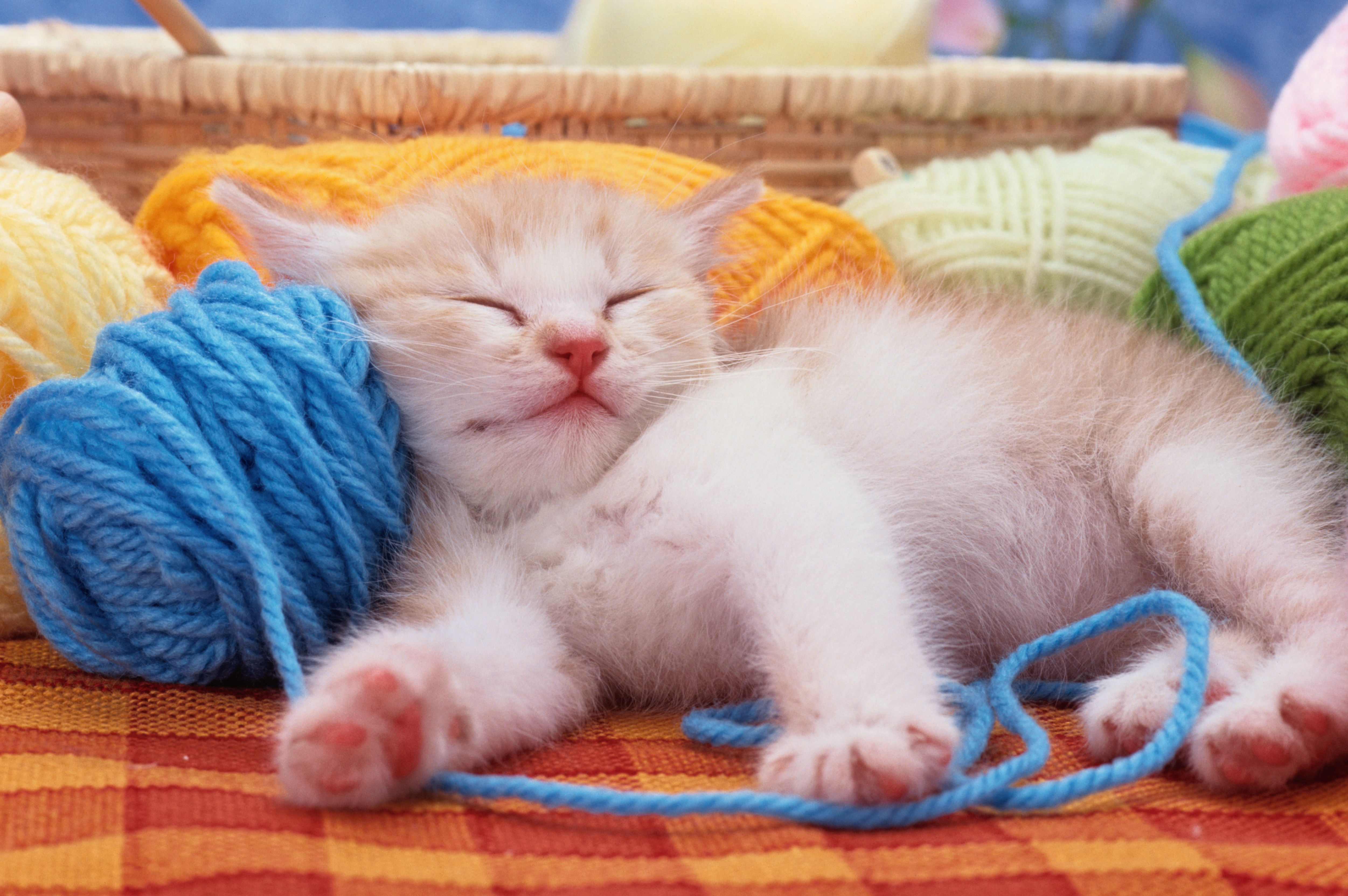 25 of the Sweetest Quotes About Cats
